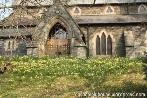 daffodilsStMarys