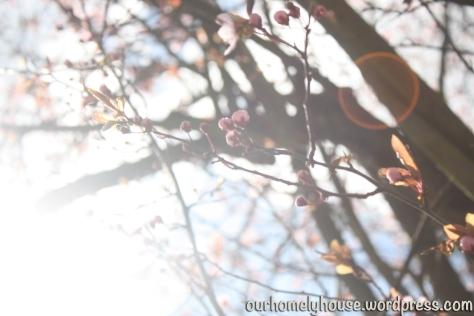 spring2013