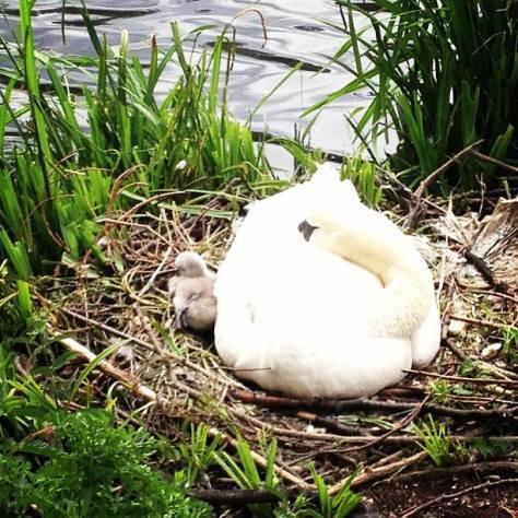 Momma Swan - My Homespun Haven