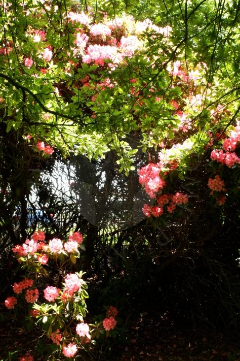 Flowers - My Homespun Haven